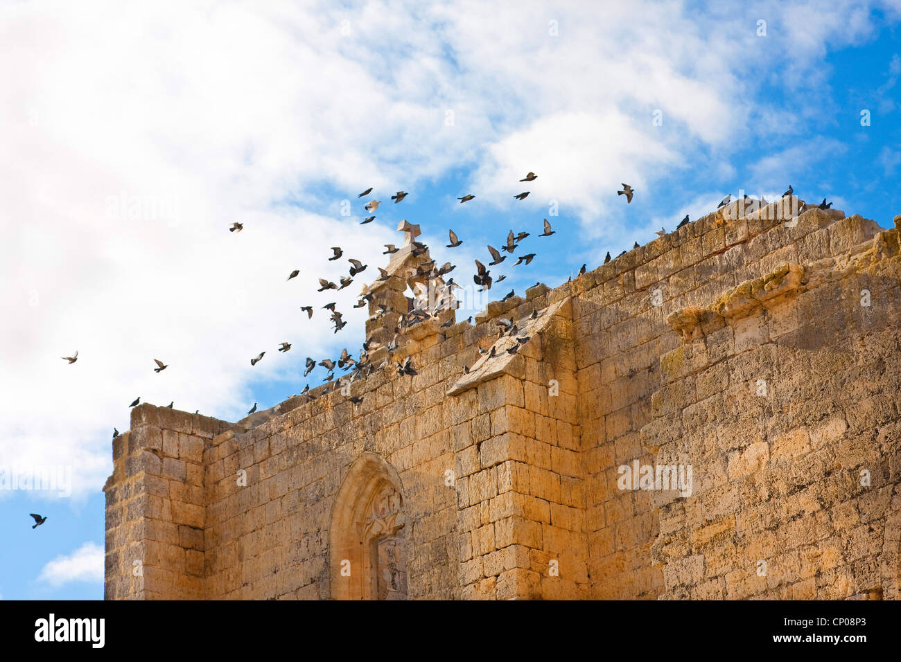 pigeons flying ver the ruin of Antonius church, Spain, Kastilien und Len, Burgos, San Anton - Stock Image