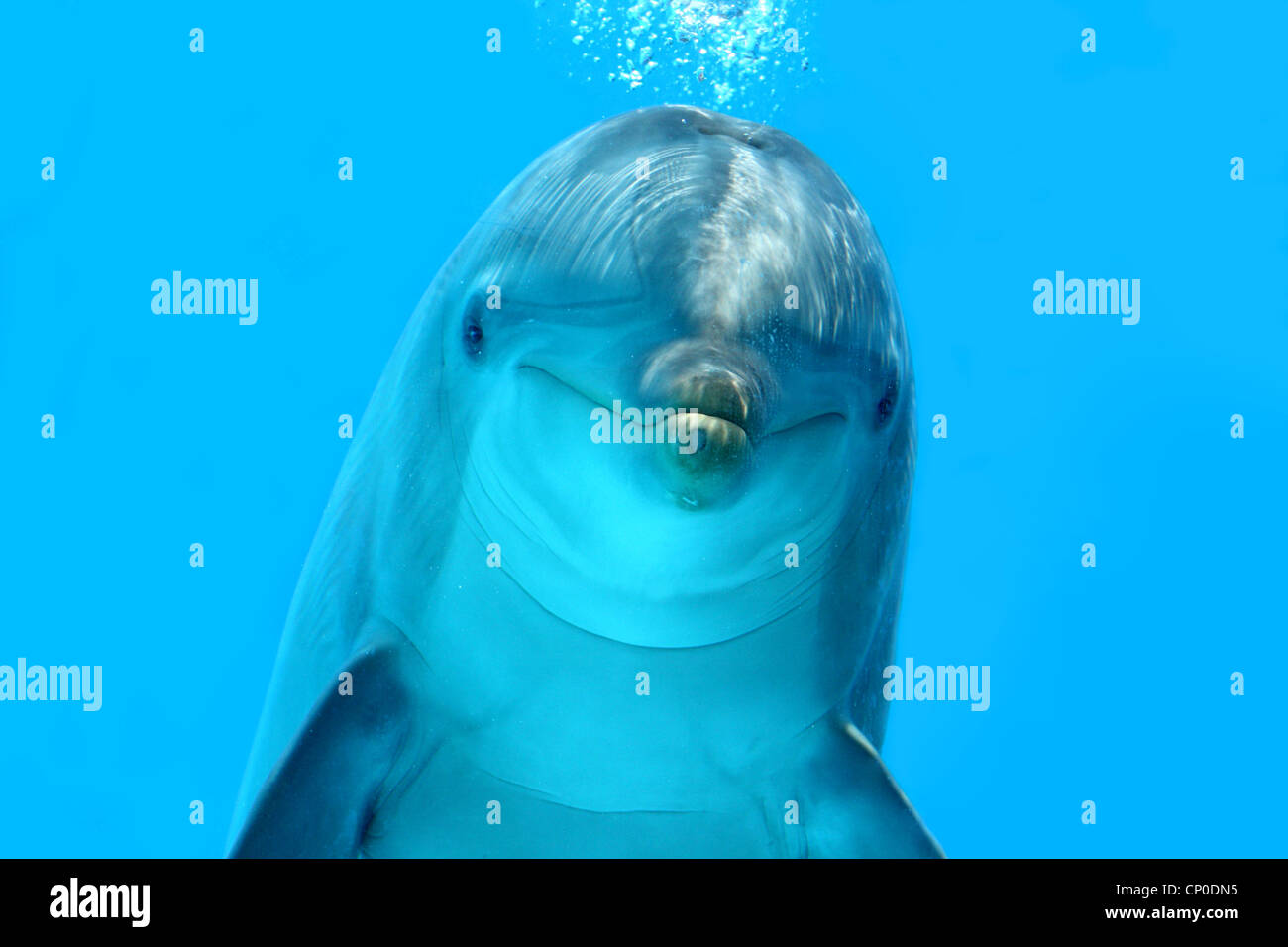 Dolphin Look - Stock Image