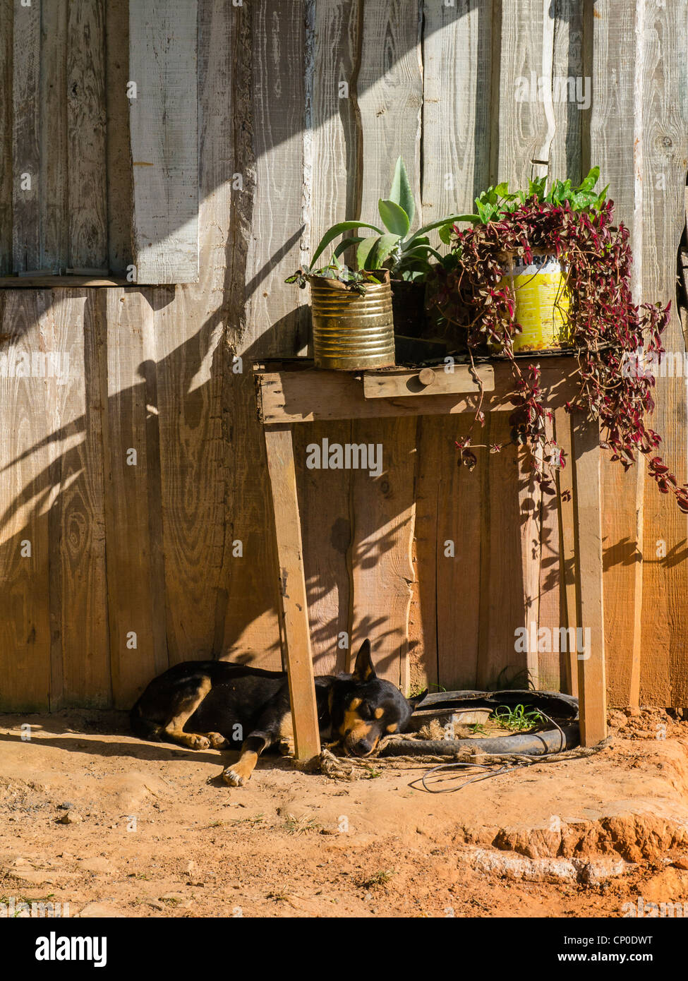 A dog is lying down in late afternoon on the ground under an old wooden table on the front porch of a house in Viñales, - Stock Image