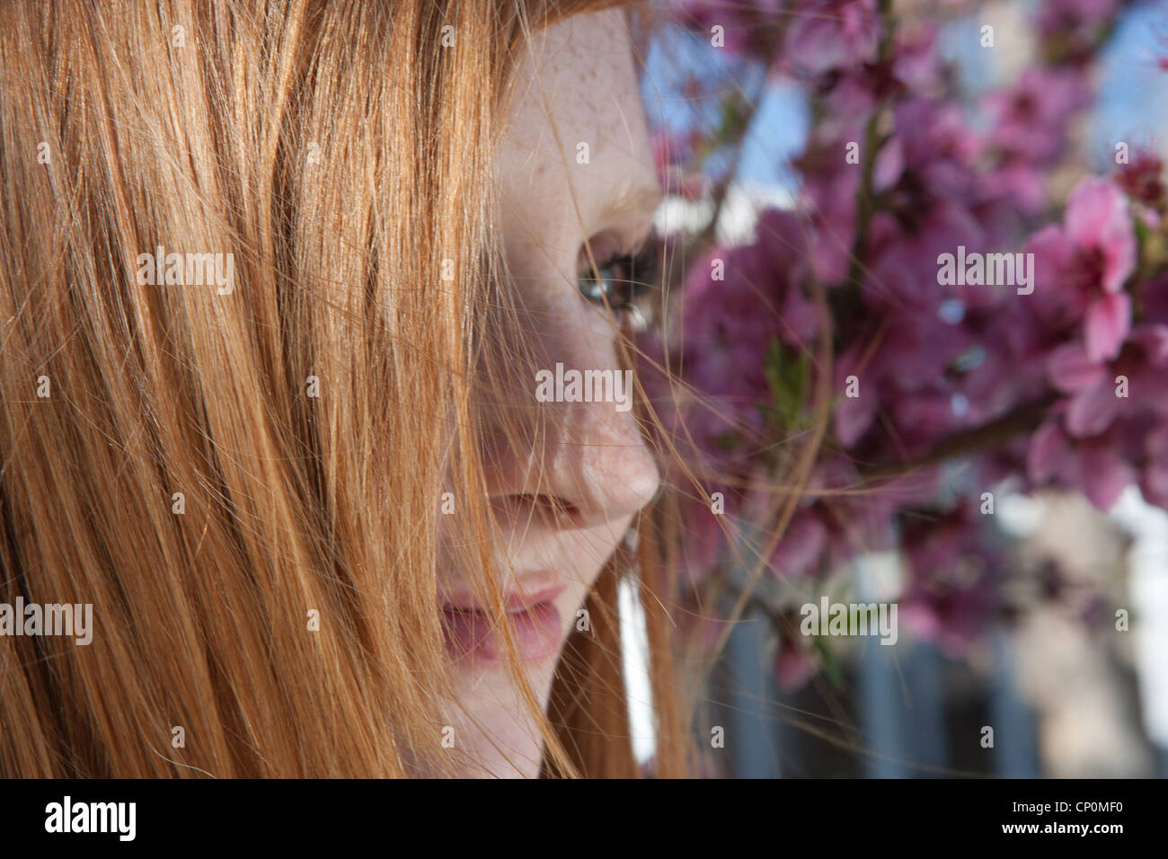 profile of woman with red hair and cherry blossoms in background. - Stock Image