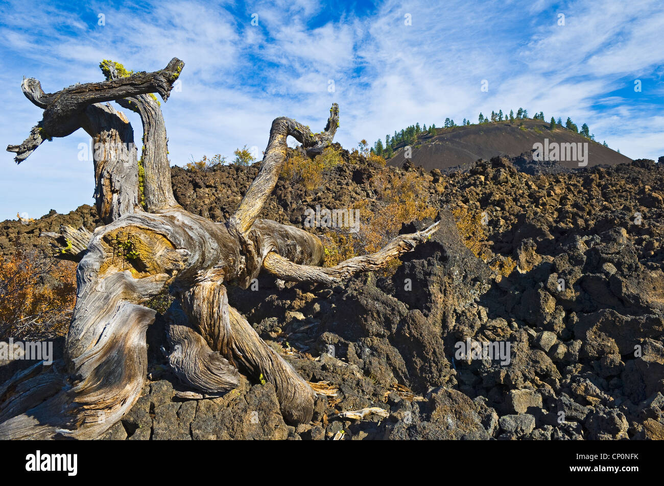 Weathered tree trunk, a'a lava flow and Lava Butte; Lava Lands Visitor Center, Newberry National Volcanic Monument, - Stock Image