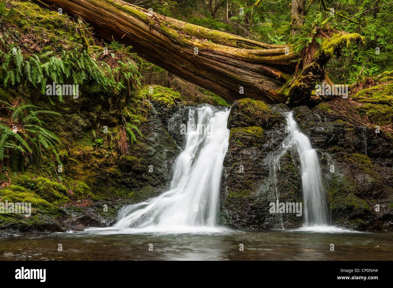 Rustic Falls, Moran State Park, Orcas Island; San Juan Islands, Washington. - Stock Image