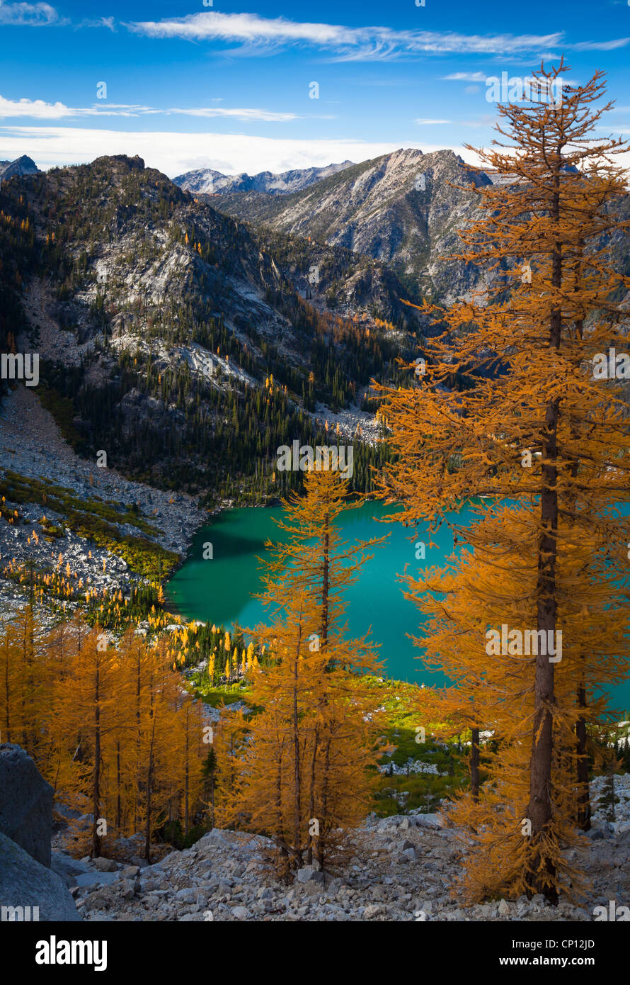 Larch trees at Asgaard Pass, high above Colchuck Lake, in the Enchantment Lakes wilderness of Washington state - Stock Image