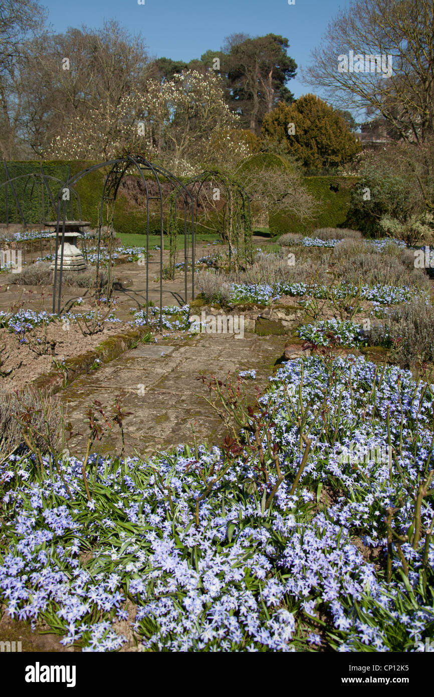 Cholmondeley Castle Gardens Picturesque Spring View Of Chionodoxa
