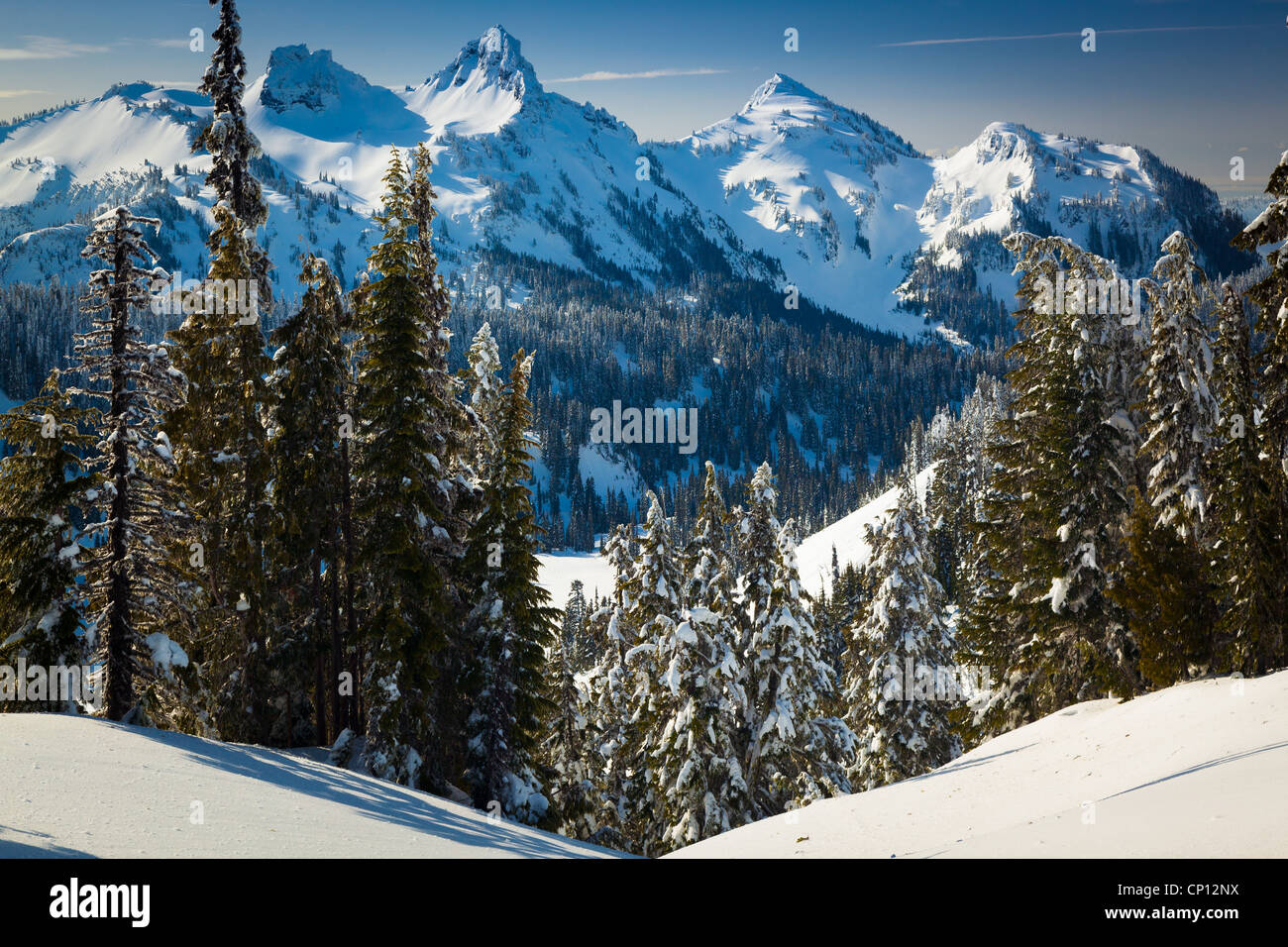 Snow and trees at the Tatoosh Range in Mount Rainier National Park in the winter. - Stock Image