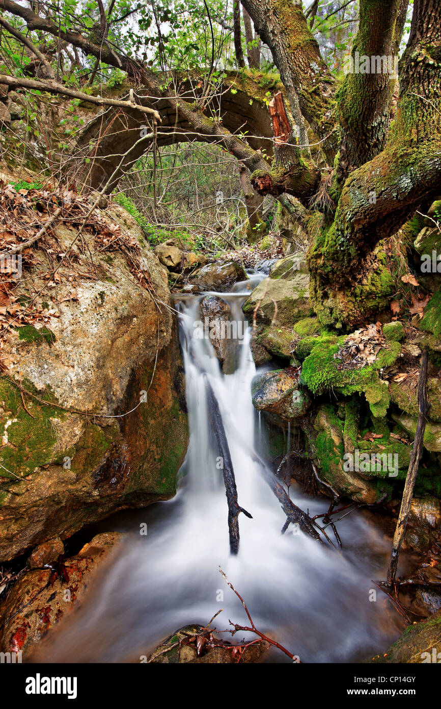 Walking in the gorge of Kambia, the most beautiful trail, on the north part of Chios island, Northeast Aegean, Greece Stock Photo