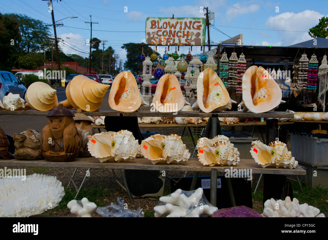 Blowing Conch Shells for sale at roadside stand at Haleiwa, Hawaii on Oahu Island - Stock Image
