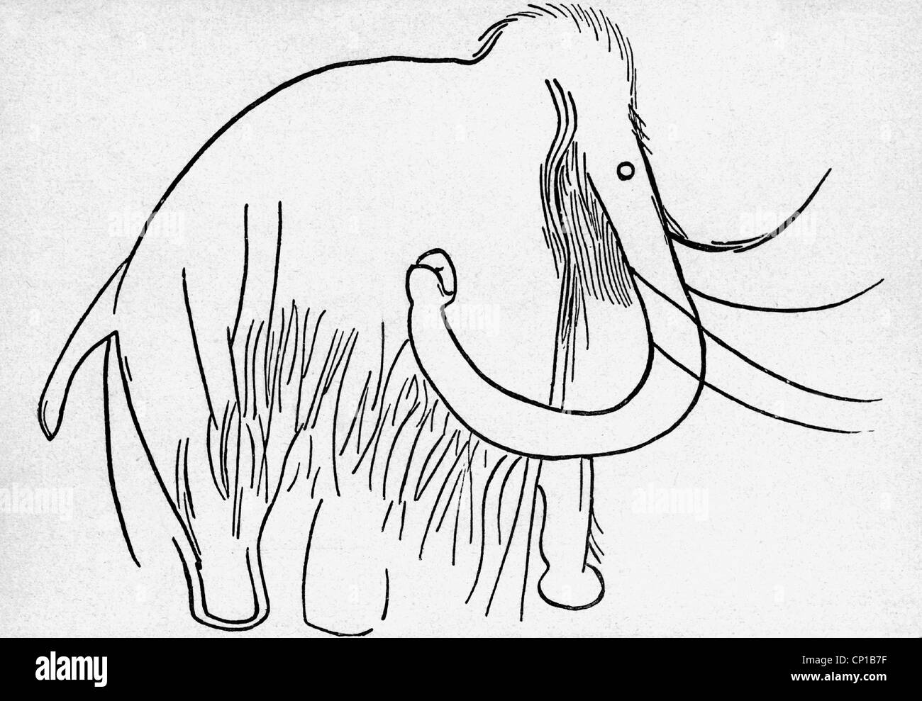 prehistory, animal, mammoth, rock drawing from the cave of Combarelles, Dordogne, France, drawing after professor - Stock Image