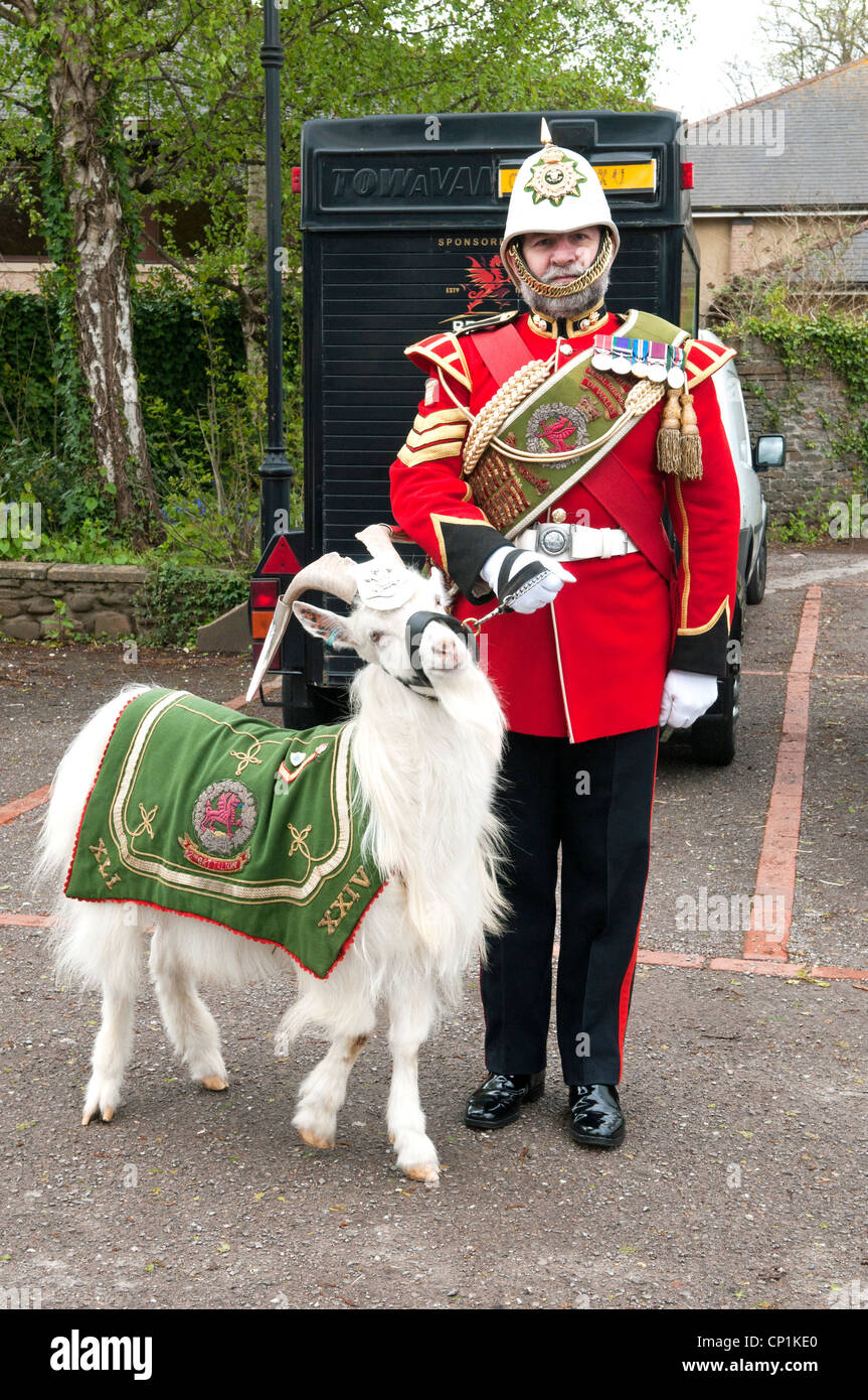 Shenkin the Goat, mascot of The Third Battalion The Royal Welsh Regiment, with his minder! - Stock Image