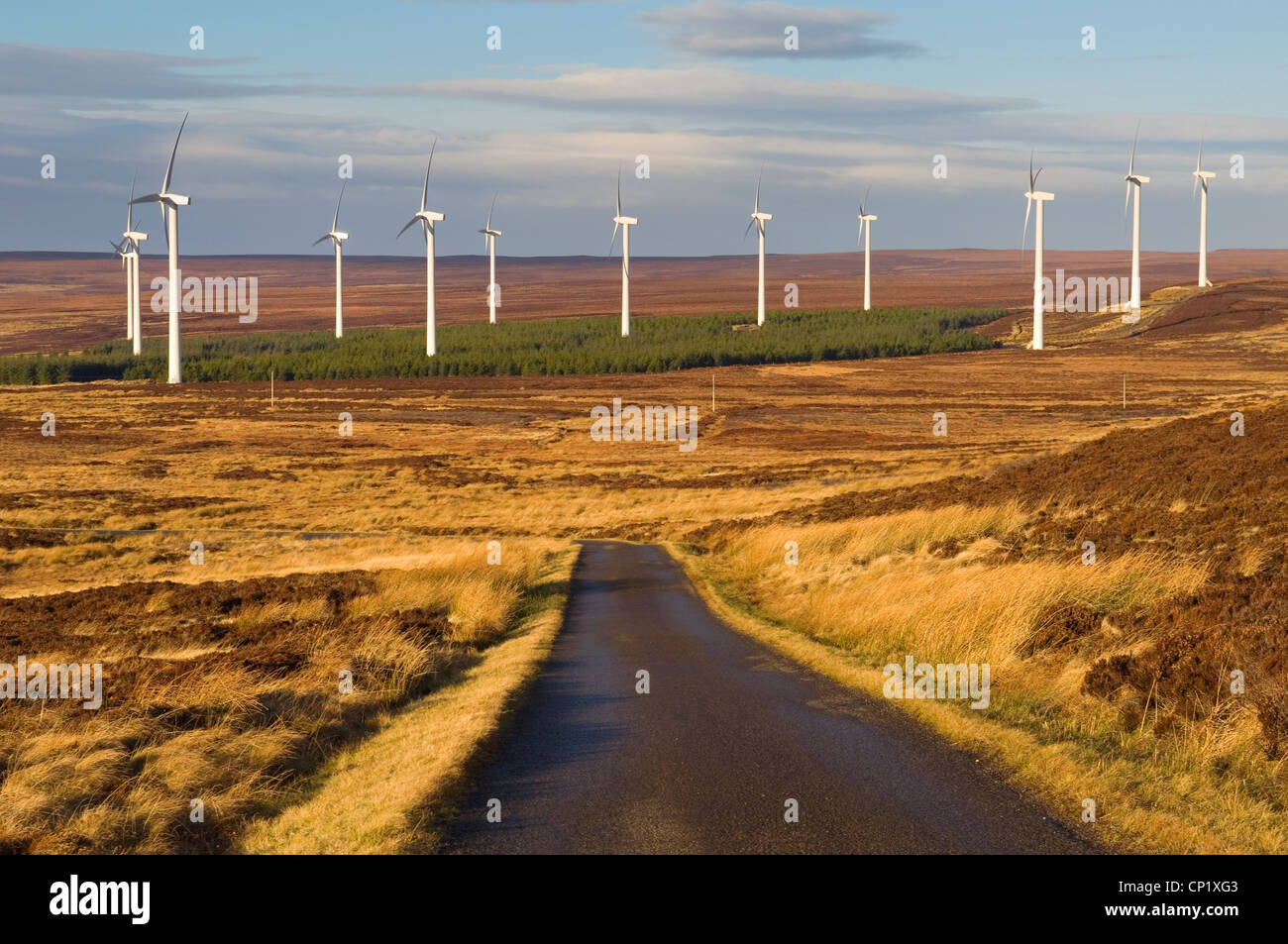 Windfarm at Houstry, Caithness, Scotland. - Stock Image