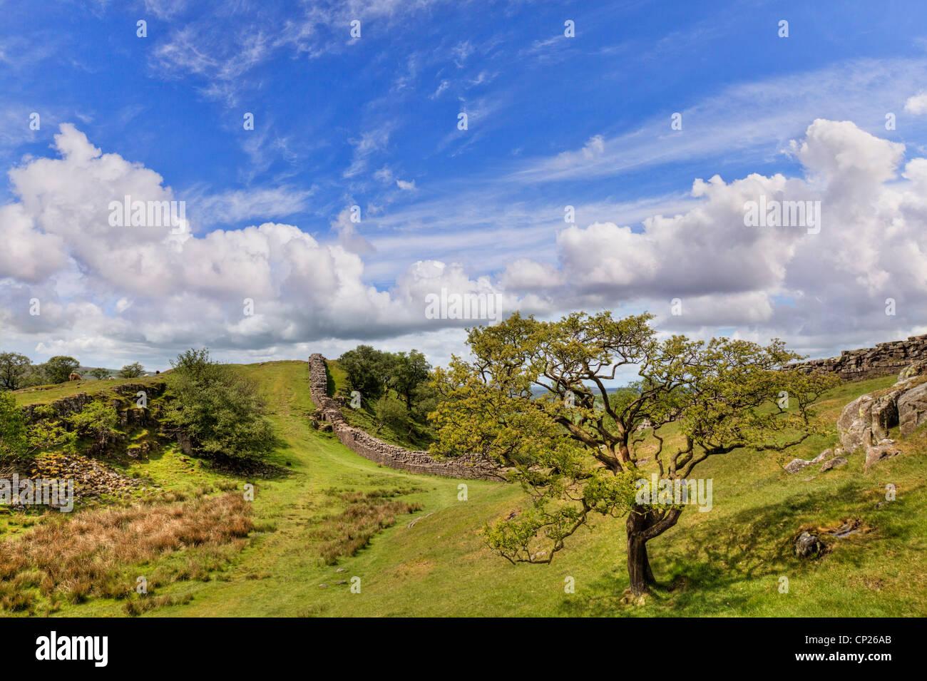 Hadrians Wall Northumberland England - Stock Image