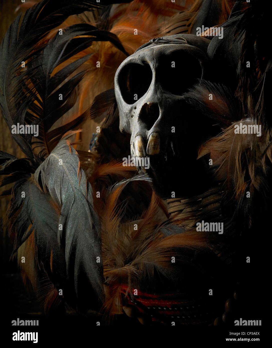 monkey skull and feathers - Stock Image
