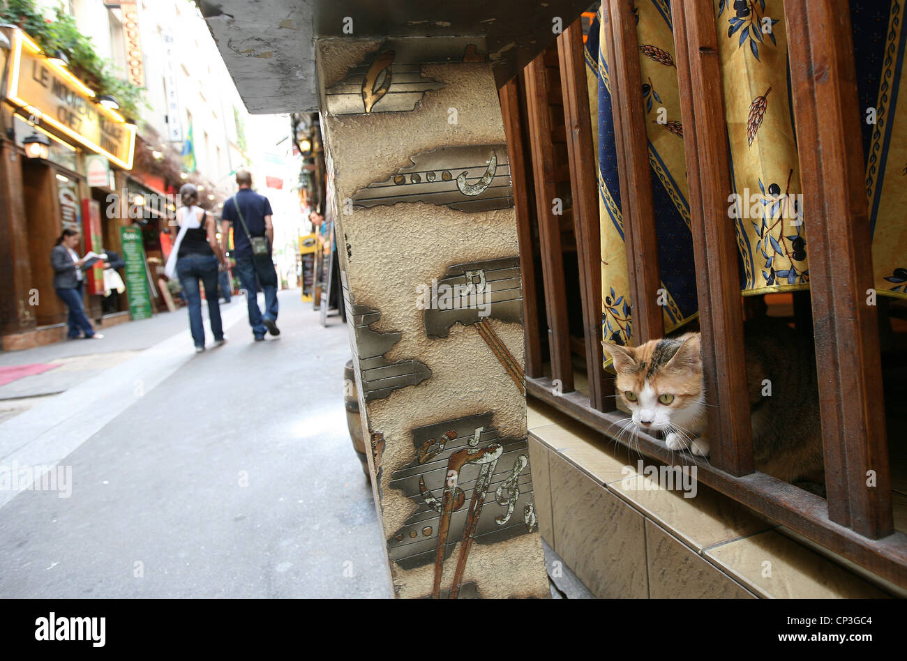 Cat left bank Paris France - Stock Image