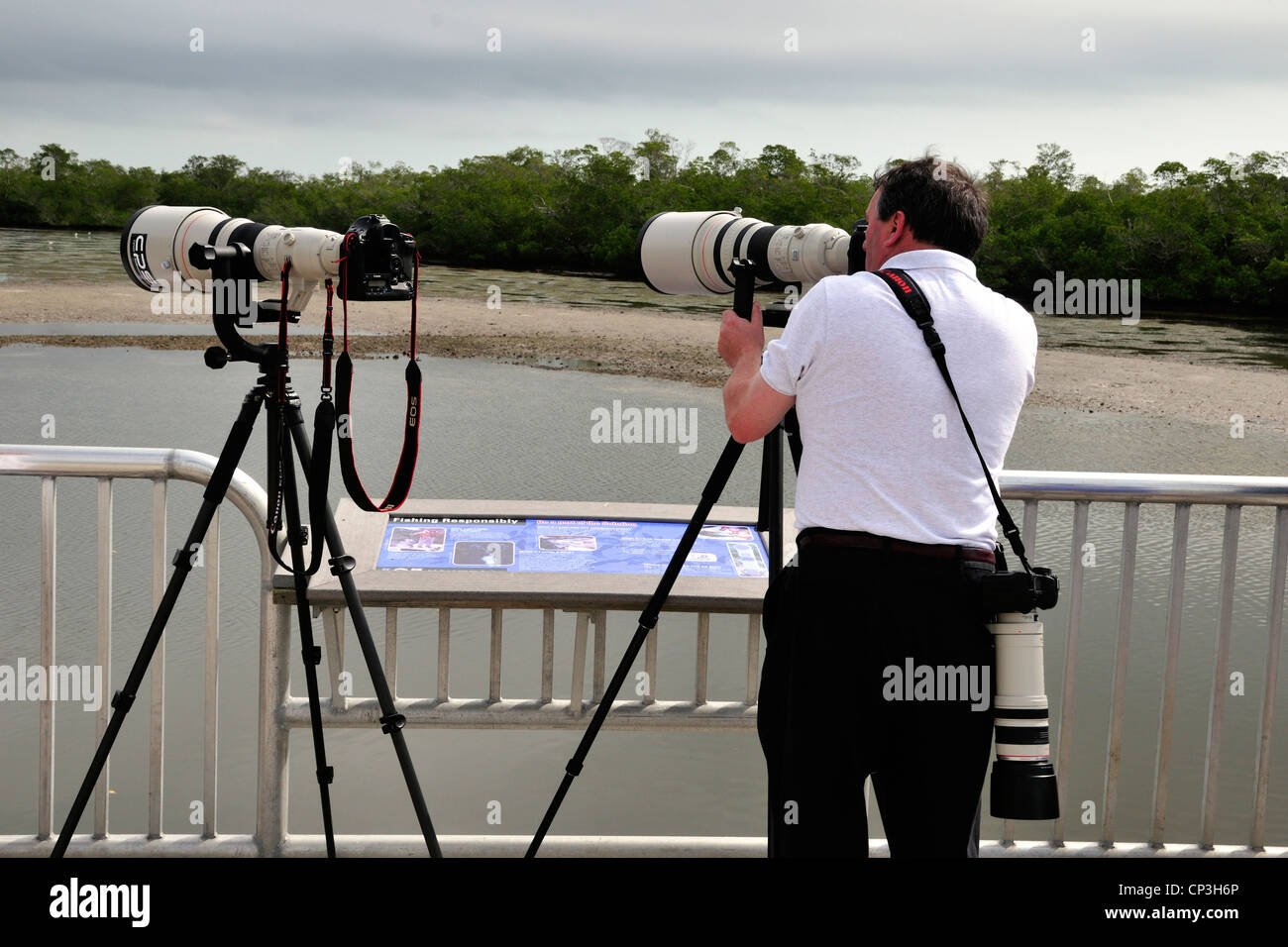 A photographer with three Canon cameras sights a bird at Ding Darling National Wildlife Refuge, Sanibel, Florida - Stock Image
