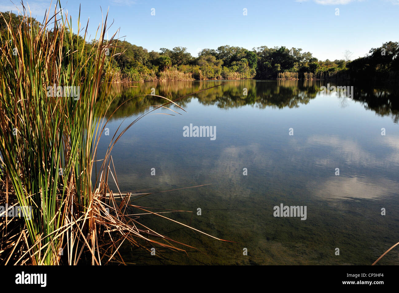 Merritt Island national Wildlife Refuge has large areas of marshland which attract birds and other animals - Stock Image