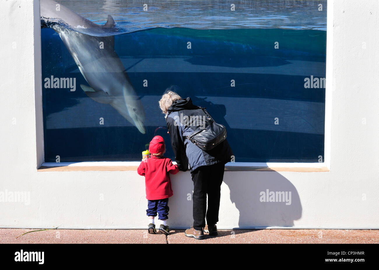 Woman and child watching an Atlantic bottlenose dolphin swiming in a large tank at Marineworld, Florida - Stock Image