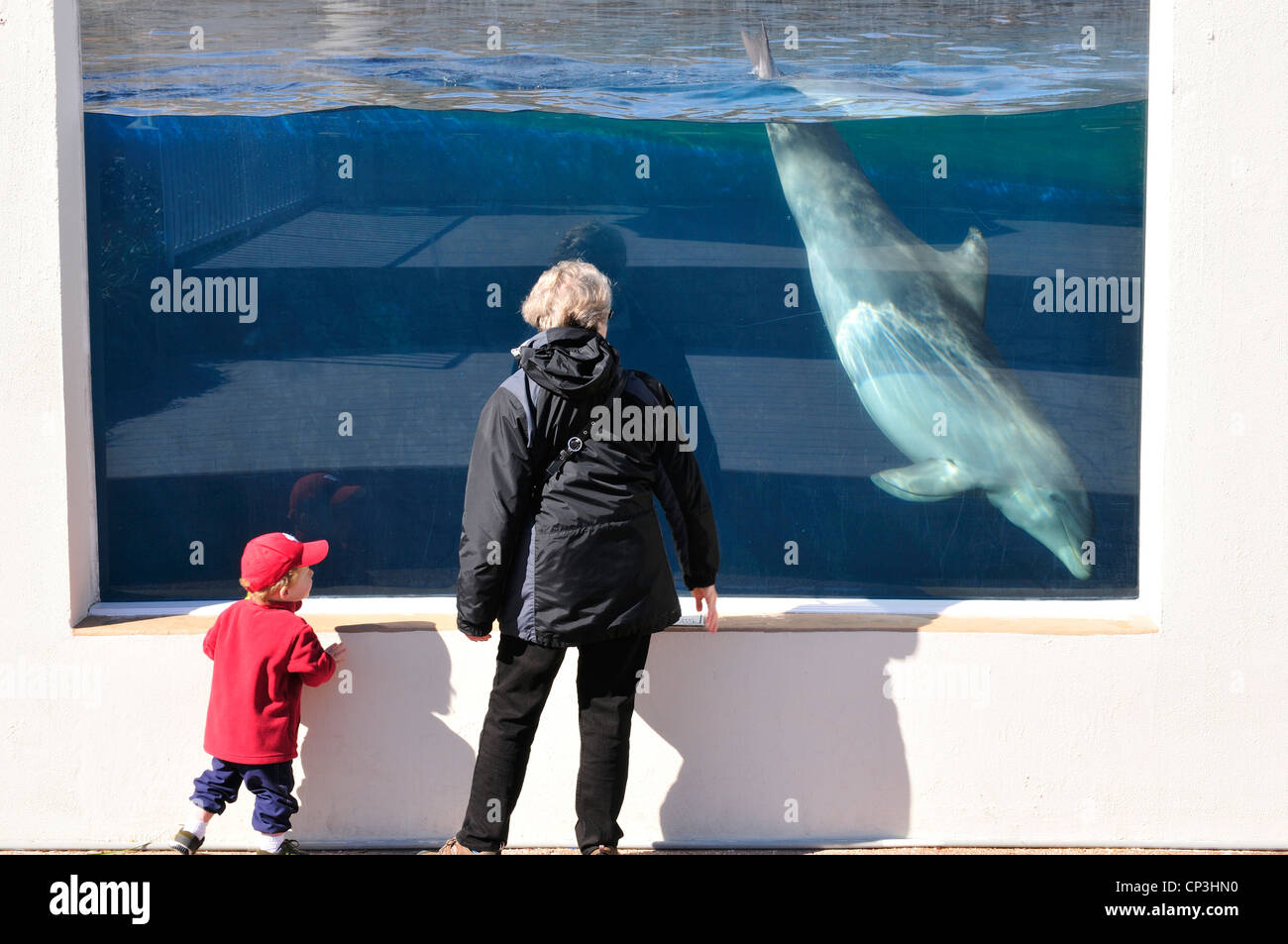 Woman and child watching an Atlantic bottlenose dolphin swimming in a large tank at Marineworld, Florida - Stock Image