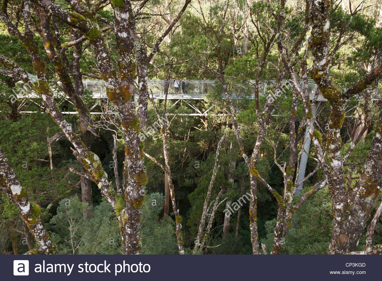 The Otway Fly Tree Top Walk on the Great Ocean Road, Victoria, Australia - Stock Image