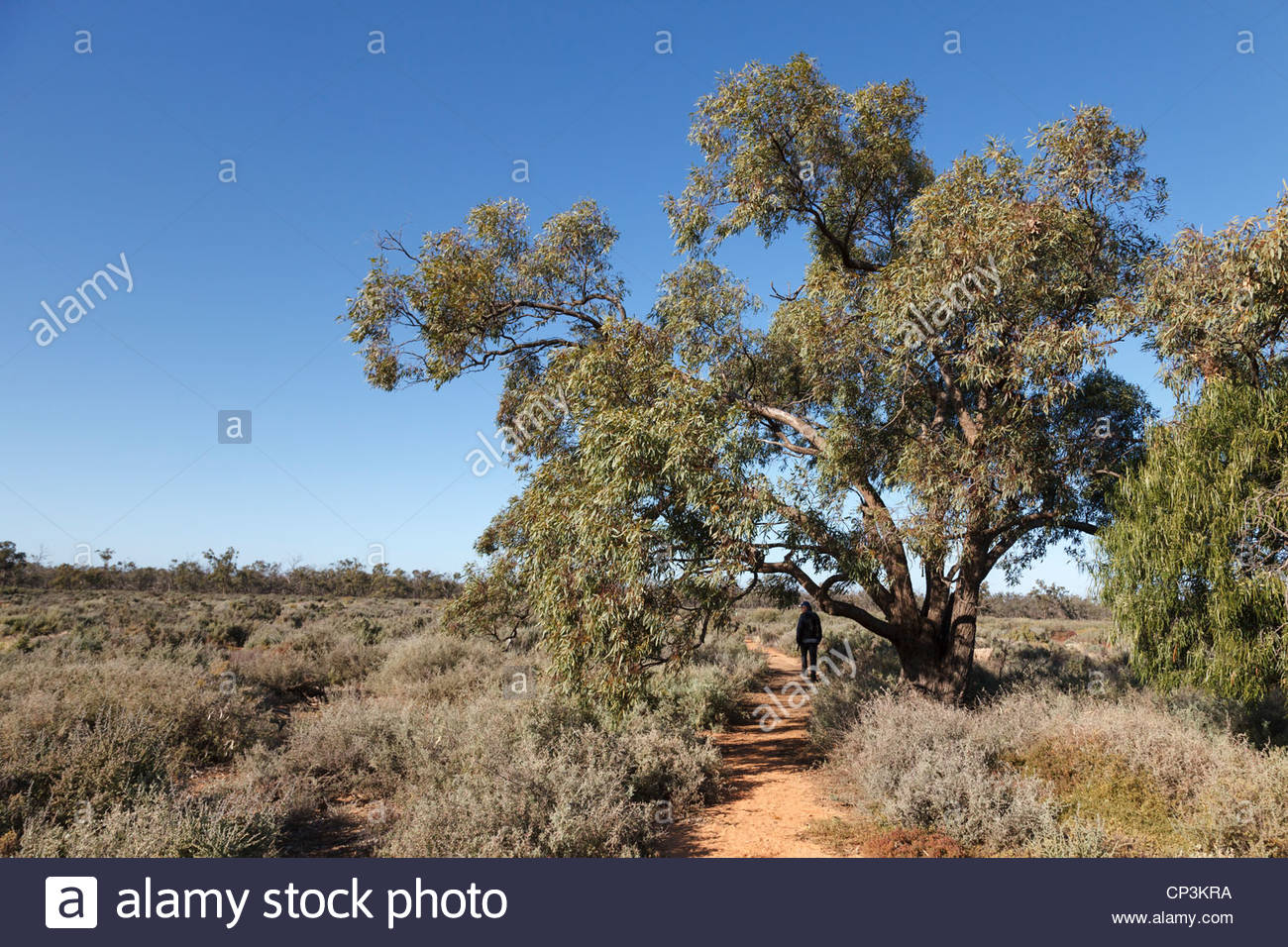 Walk through the salt-bush country of Willandra National Park, New South Wales, Australia - Stock Image
