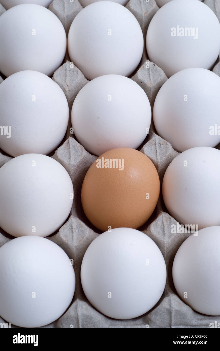 White eggs with a brown egg, conceptual images. - Stock Image