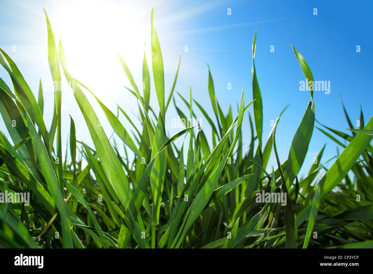 Closeup of green grass and blue sky with sun - Stock Image