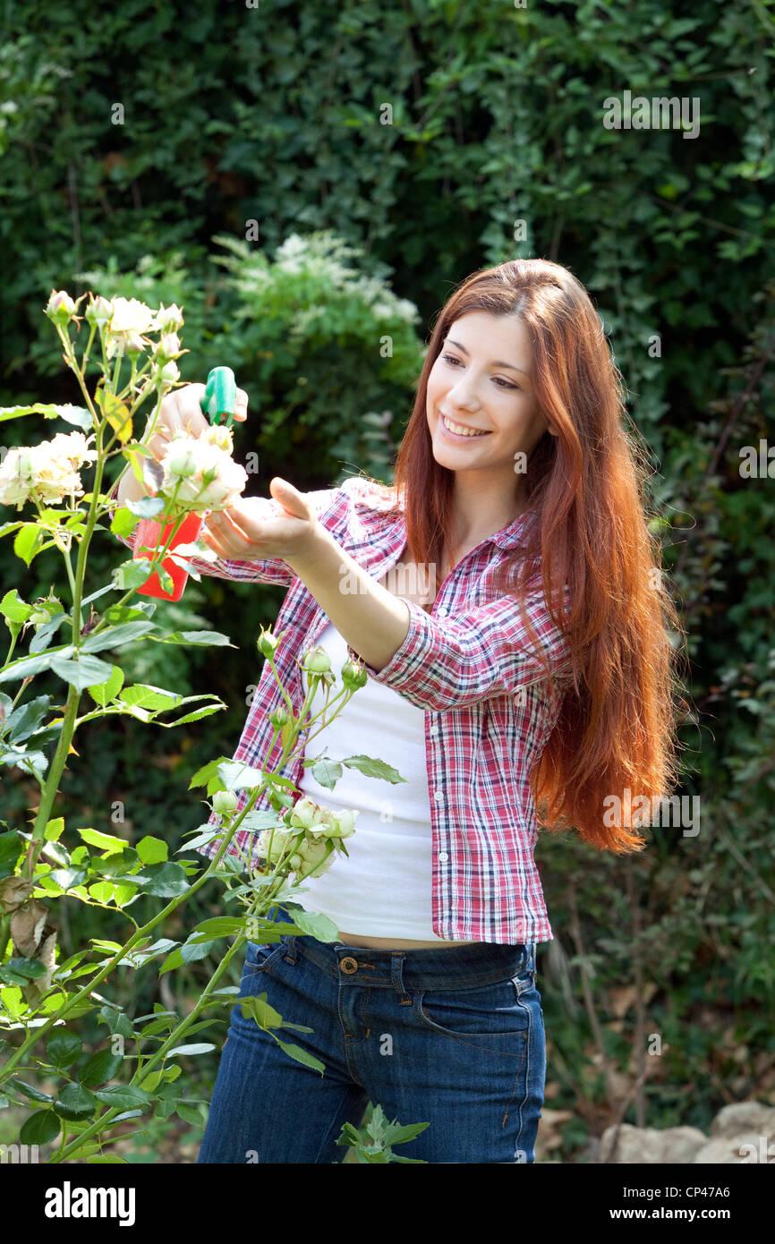 a woman spraying a antiparasitic on a rose garden - Stock Image