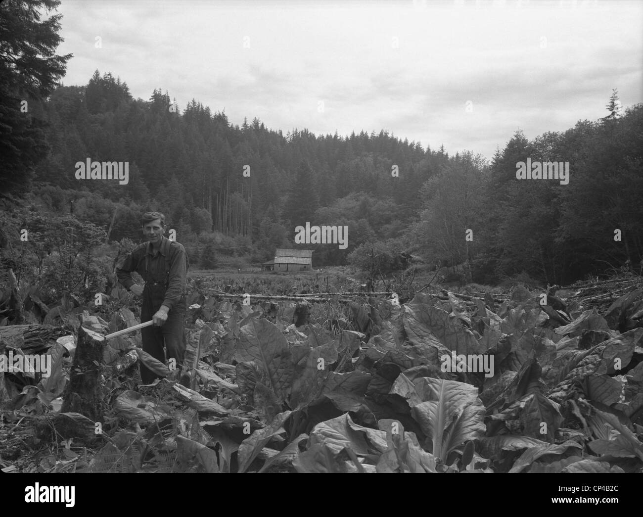 1930's Oregon pioneer. After taking over an abandoned homestead in the Oregon hills, a man struggles to reclaim - Stock Image