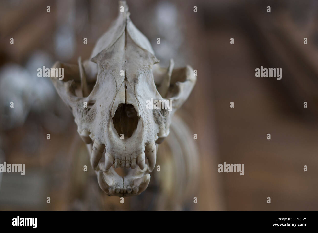 Museum of natural history of Paris. - Stock Image