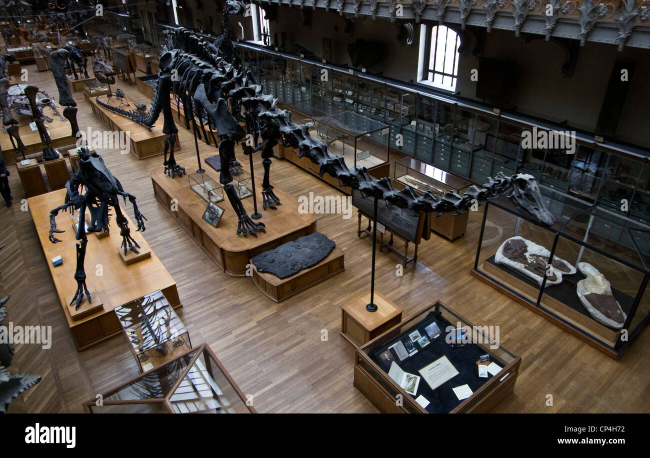Museum of natural history of Paris. Dinosaurs hall. - Stock Image