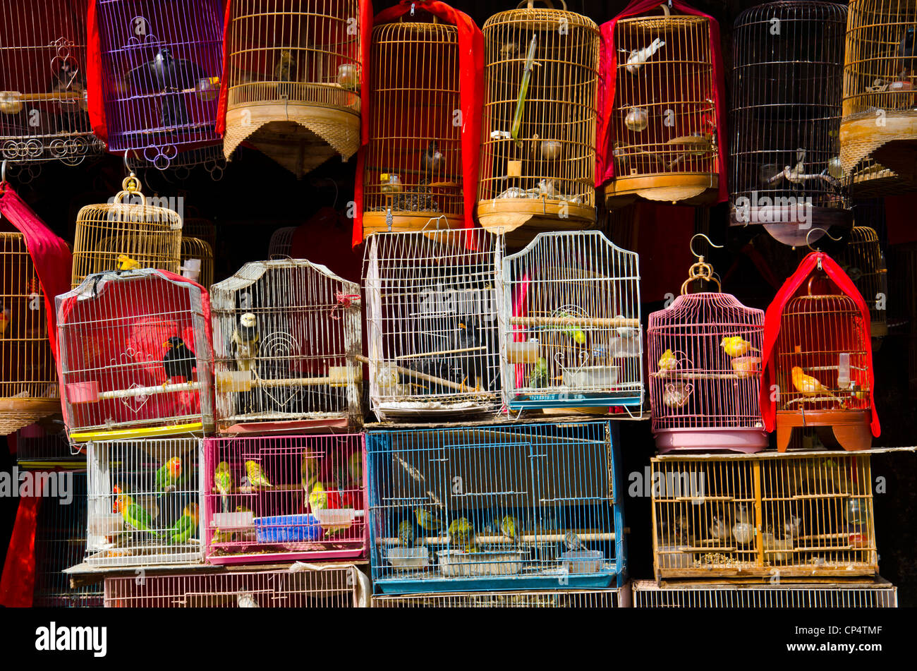 Birds cage with birds for sale - Stock Image