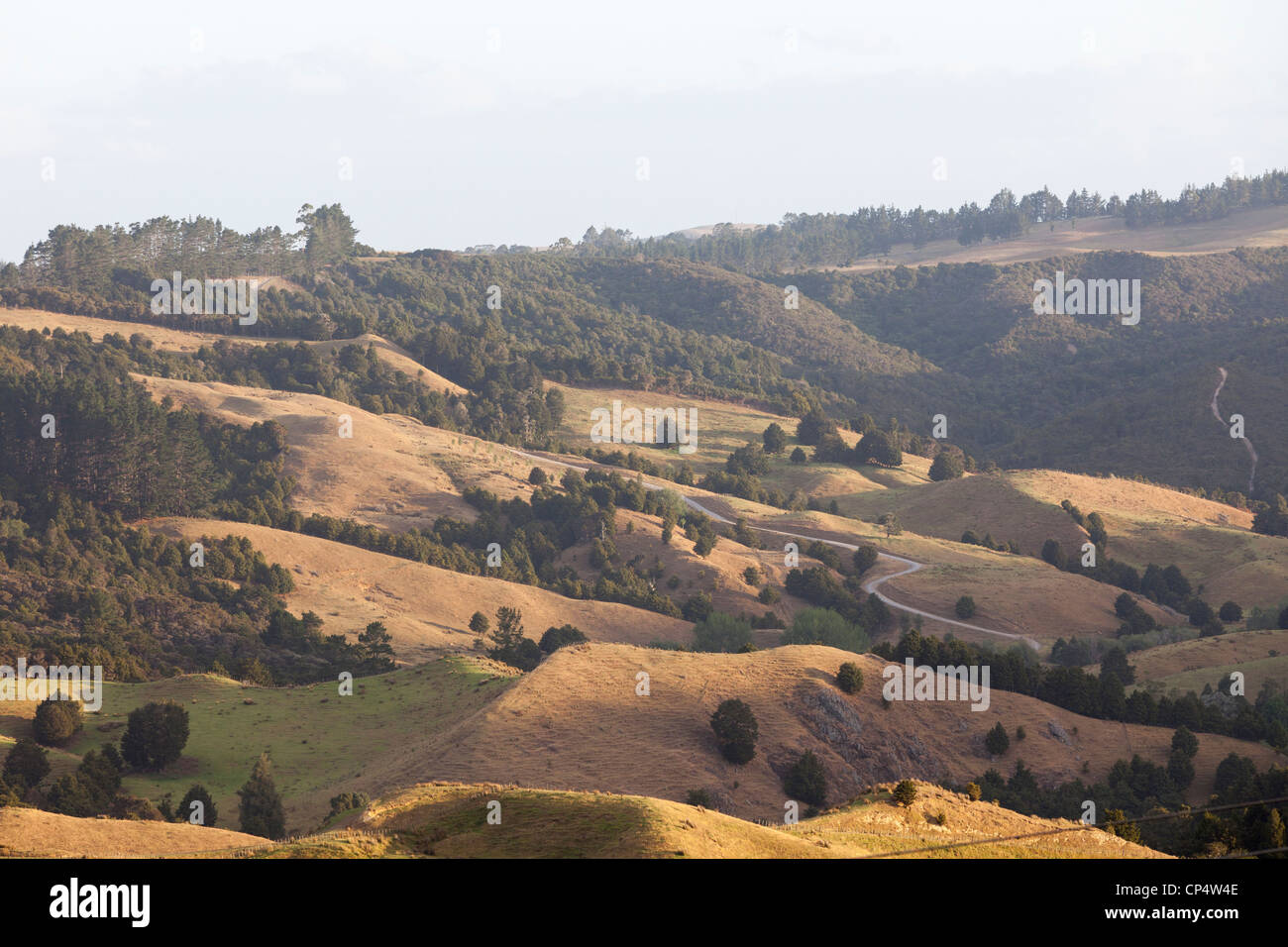 A pastoral scene with golden grass hills, pastureland spotted with trees in northern New Zealand - Stock Image