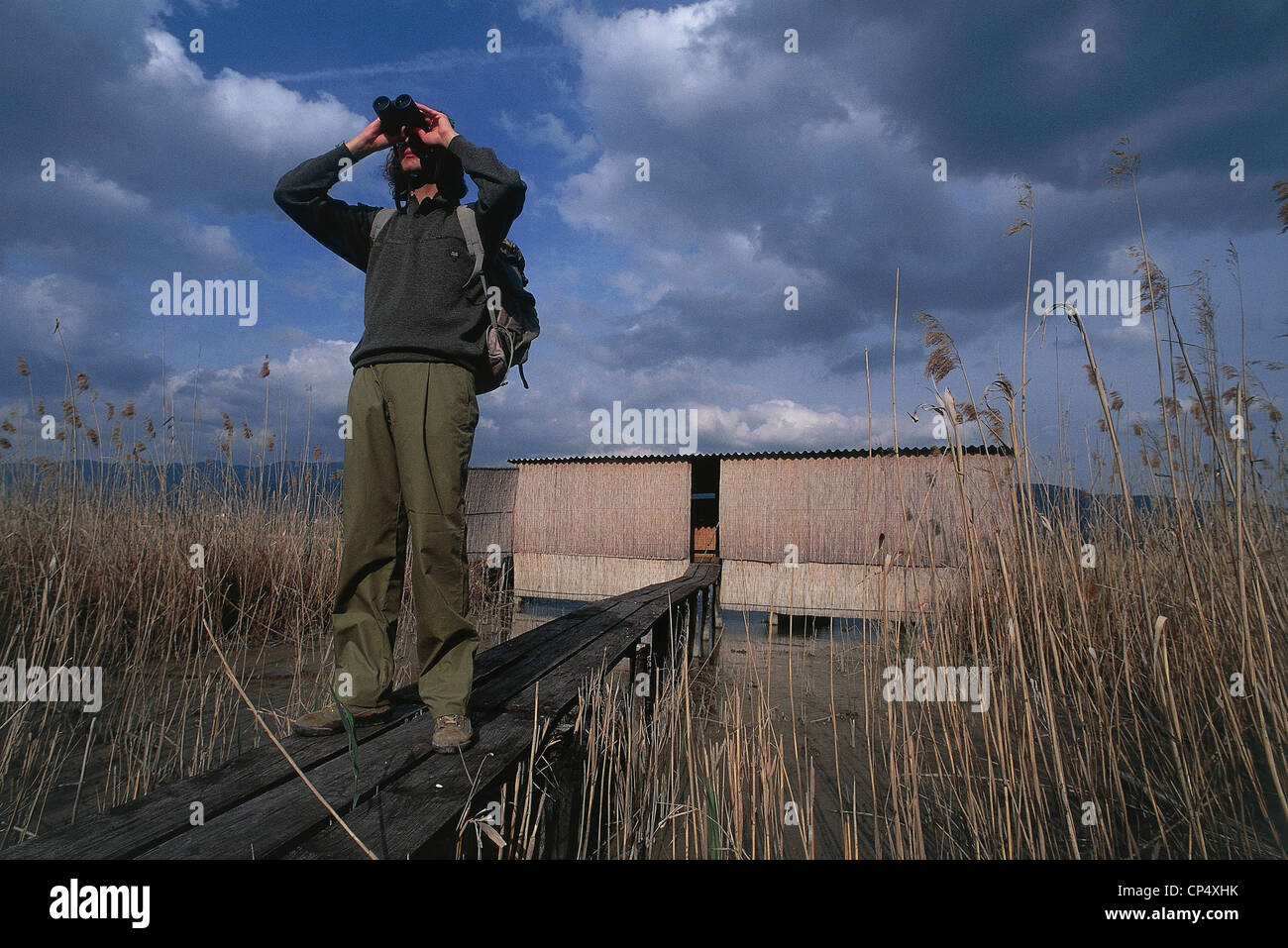 Umbria - Alviano (Tr) - WWF - Birdwatching in the reeds. - Stock Image