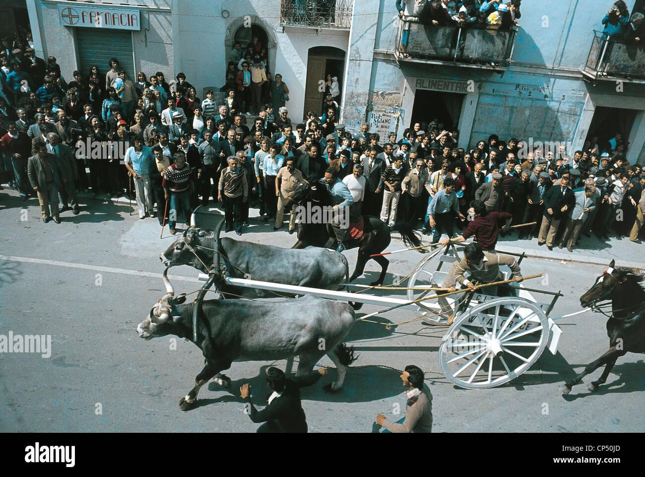 SAN MARTINO IN FOLKLORE MOLISE Pensilis RACE THAT BUOI Carresi - Stock Image