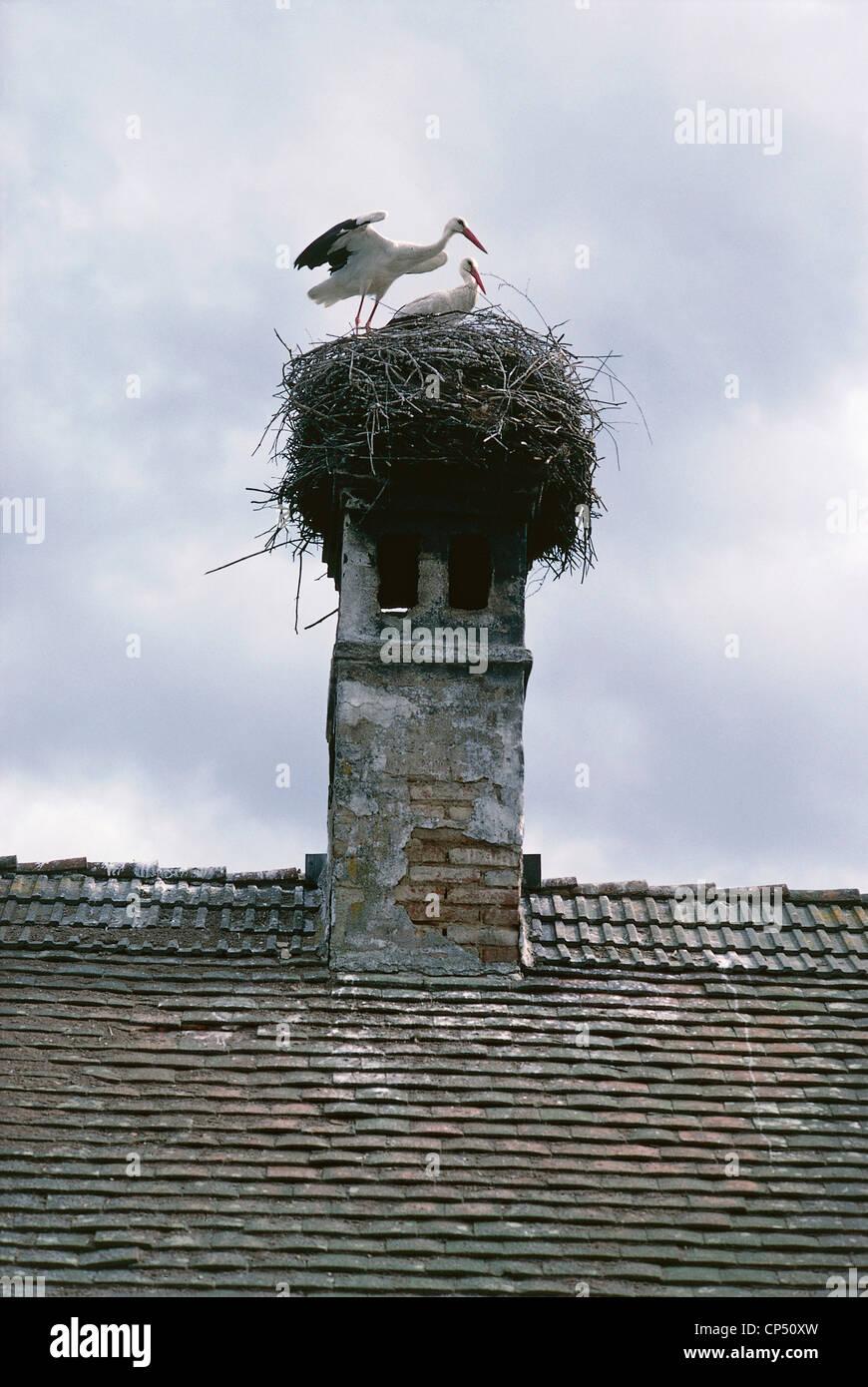 Zoology - Birds - Ciconiformi - Nest of White Stork (Ciconia ciconia) on a chimney. Austria, Burgenland. - Stock Image