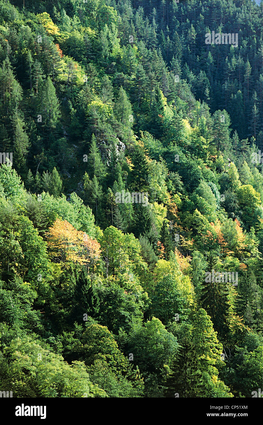 France - Parc National du Mercantour. Bosco. - Stock Image