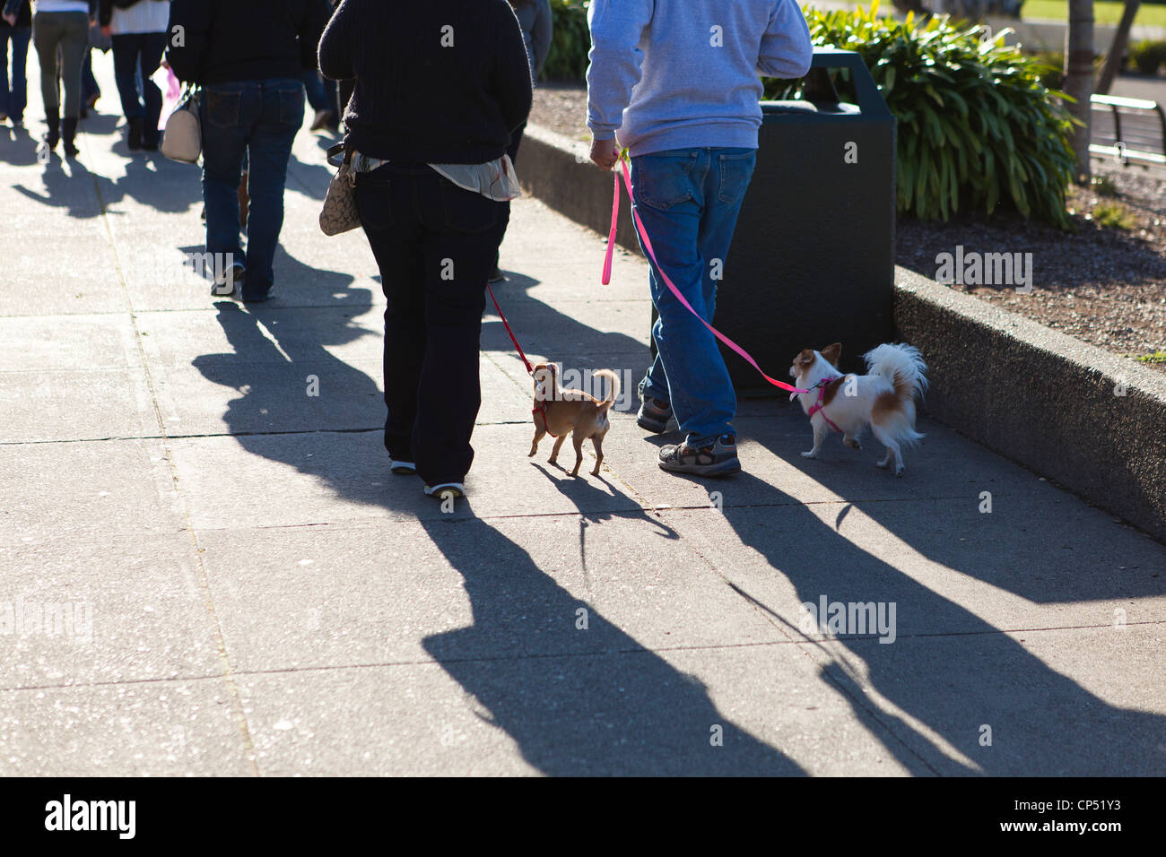 Small dogs out for an afternoon walk - Stock Image