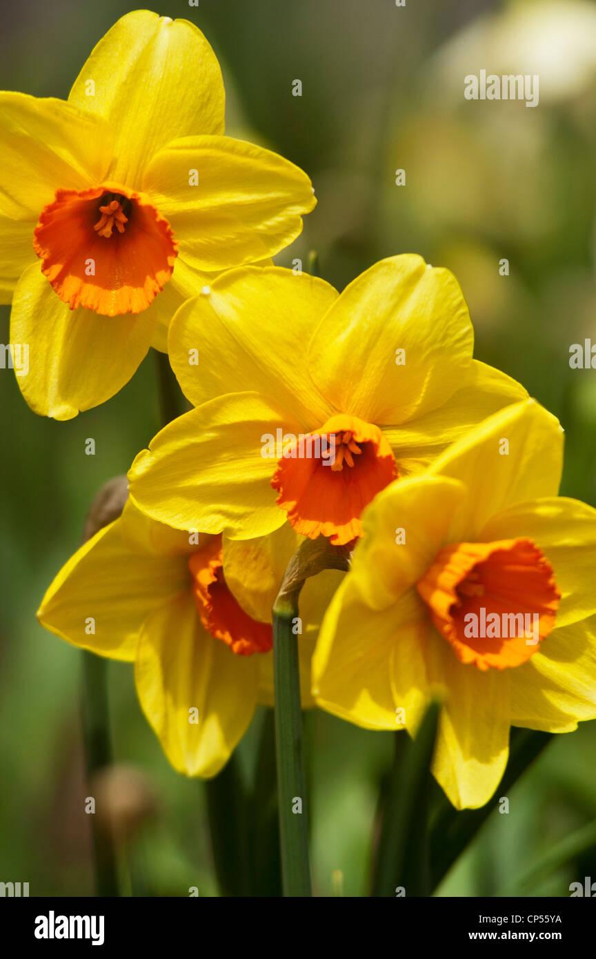 Yellow Flower Four Orange Petals Stock Photos Yellow Flower Four