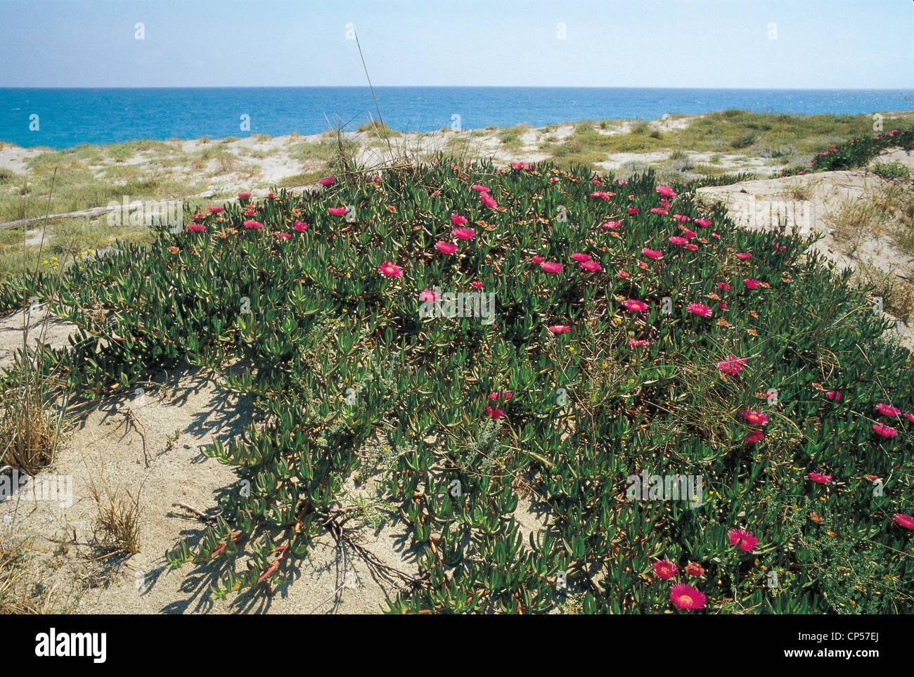 CALABRIA SIDERNO Ionian Coast - Stock Image