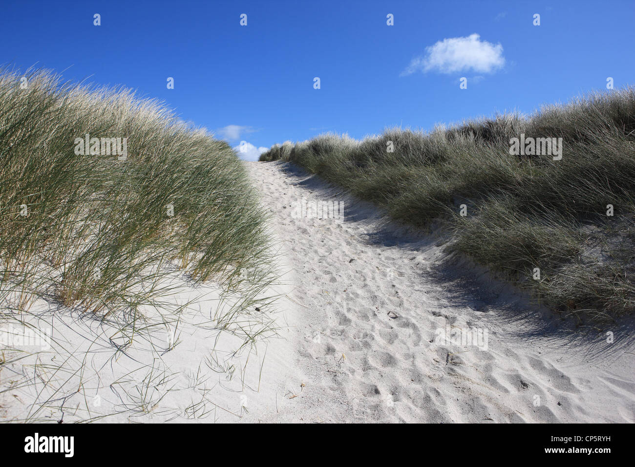 Sandy path with footprints, bordered by marram grass, leading away from the beach - Stock Image