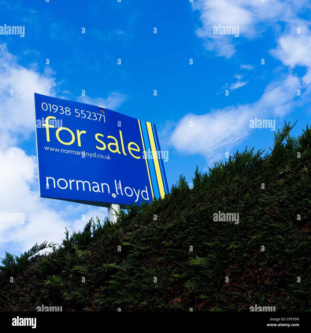 House for sale sign, above a privet hedge, UK - Stock Image