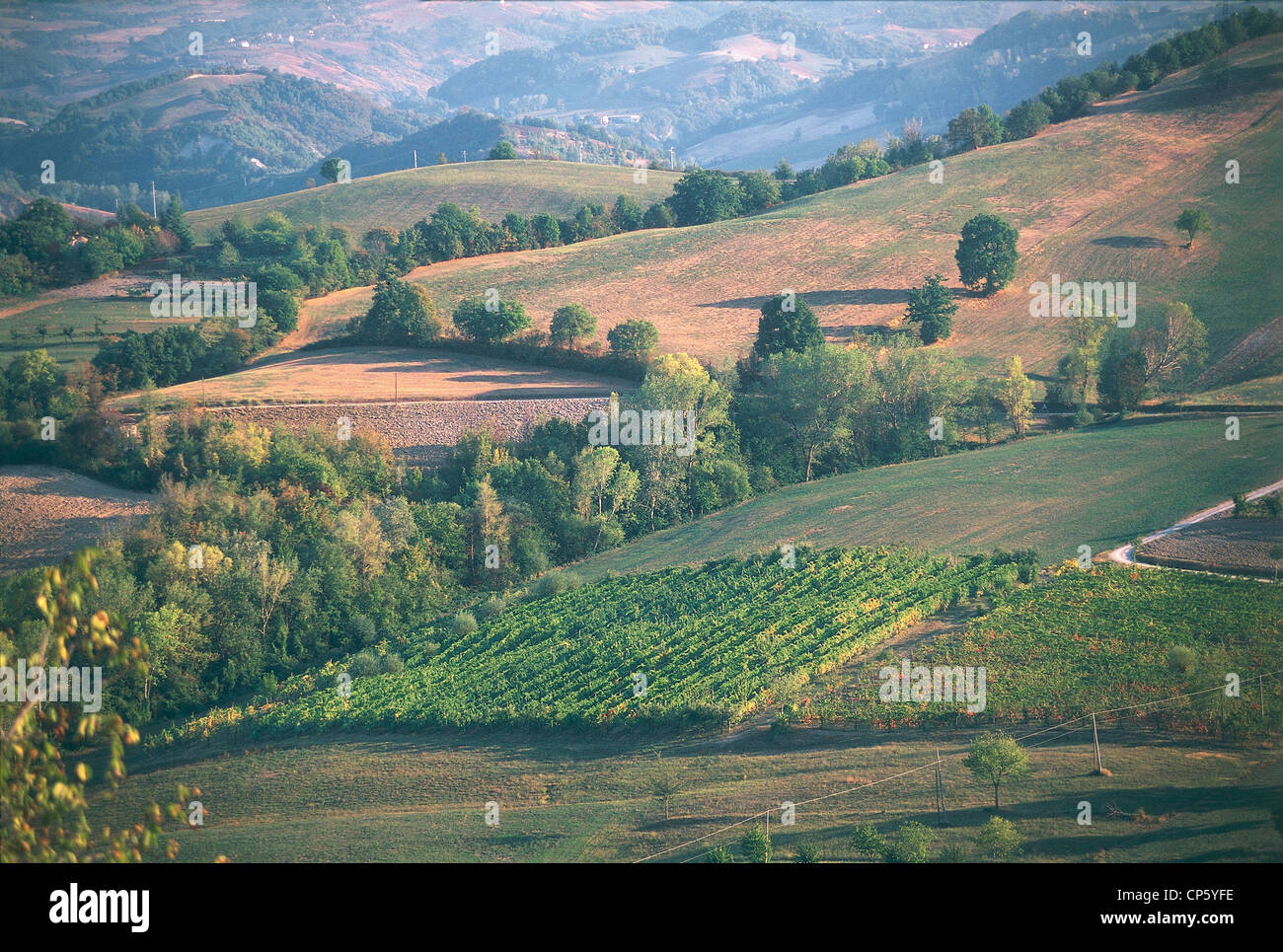 Emilia Romagna - Vineyards in Castel San Pietro Terme and Sassoleone. Stock Photo