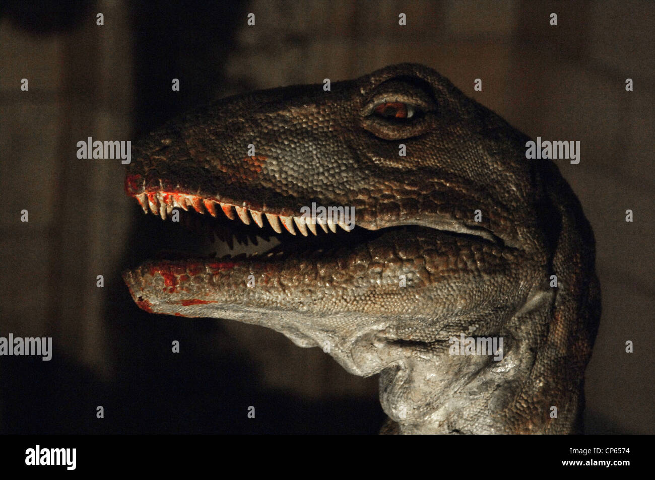 Reproduction of a Deinonychus (Deinonychus antirrhopus). Lower Cretaceous. 119-97 million years ago. - Stock Image