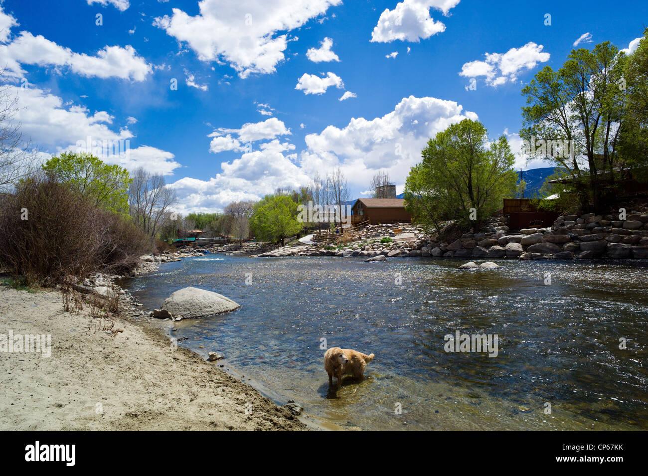 Ruby, a Golden Retriever dog, playing alongside the sun lit Arkansas River, Salida, Colorado, USA - Stock Image