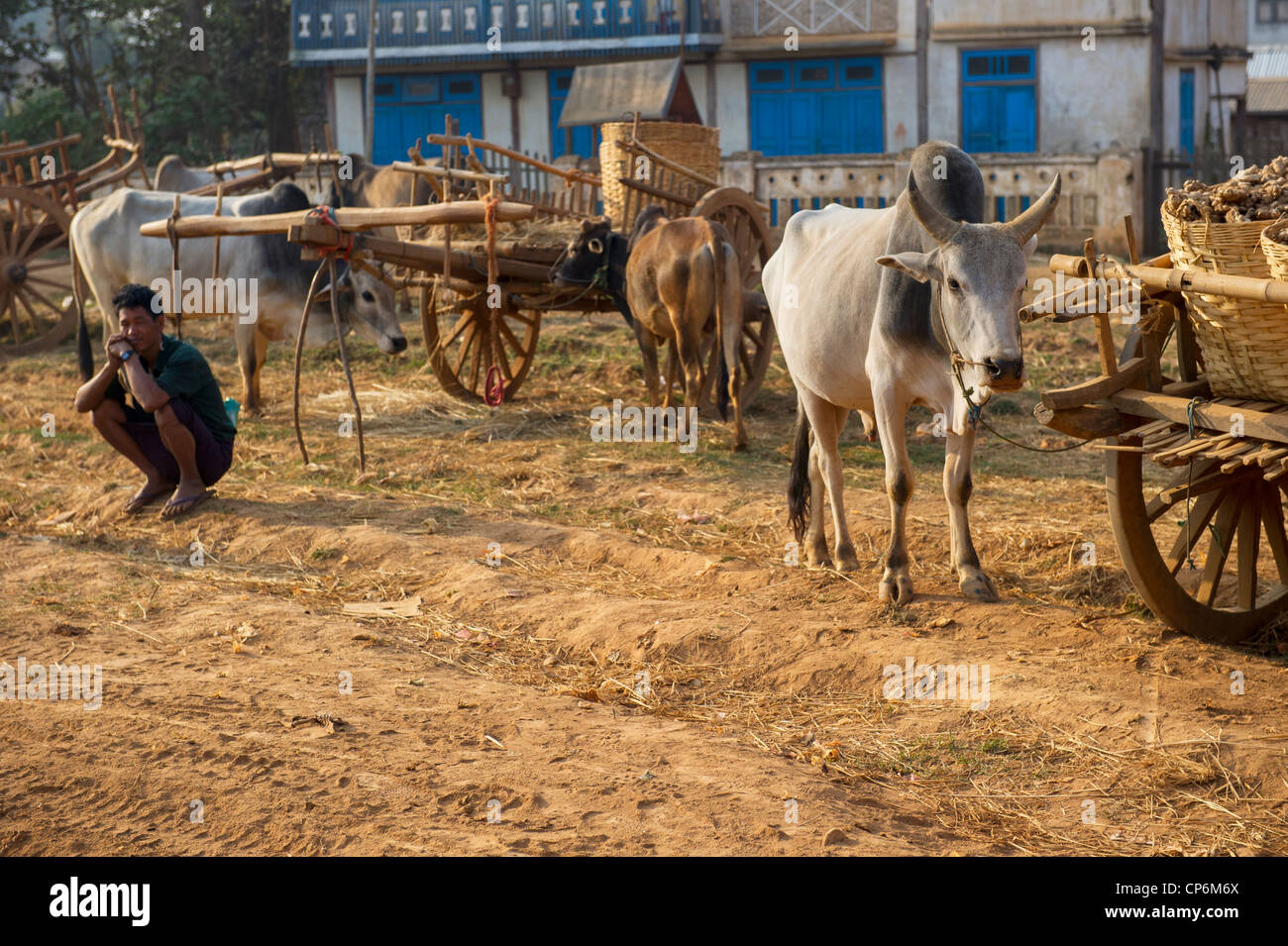 Ox carts in Central Market,  Heho, Myanmar - Stock Image
