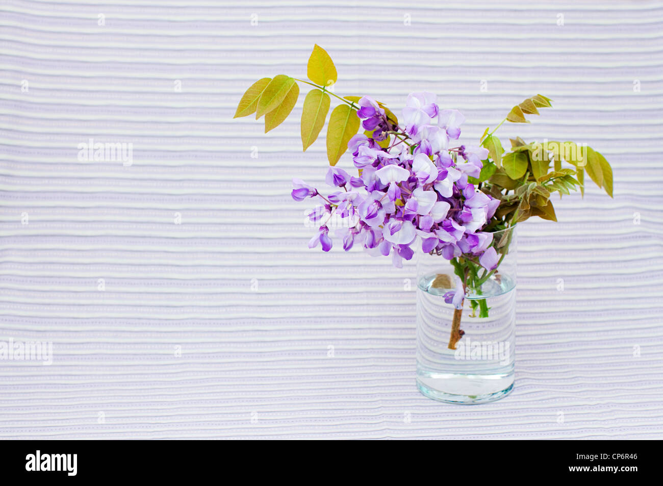 flowers of wisteria in a vase on violet stripe background - Stock Image
