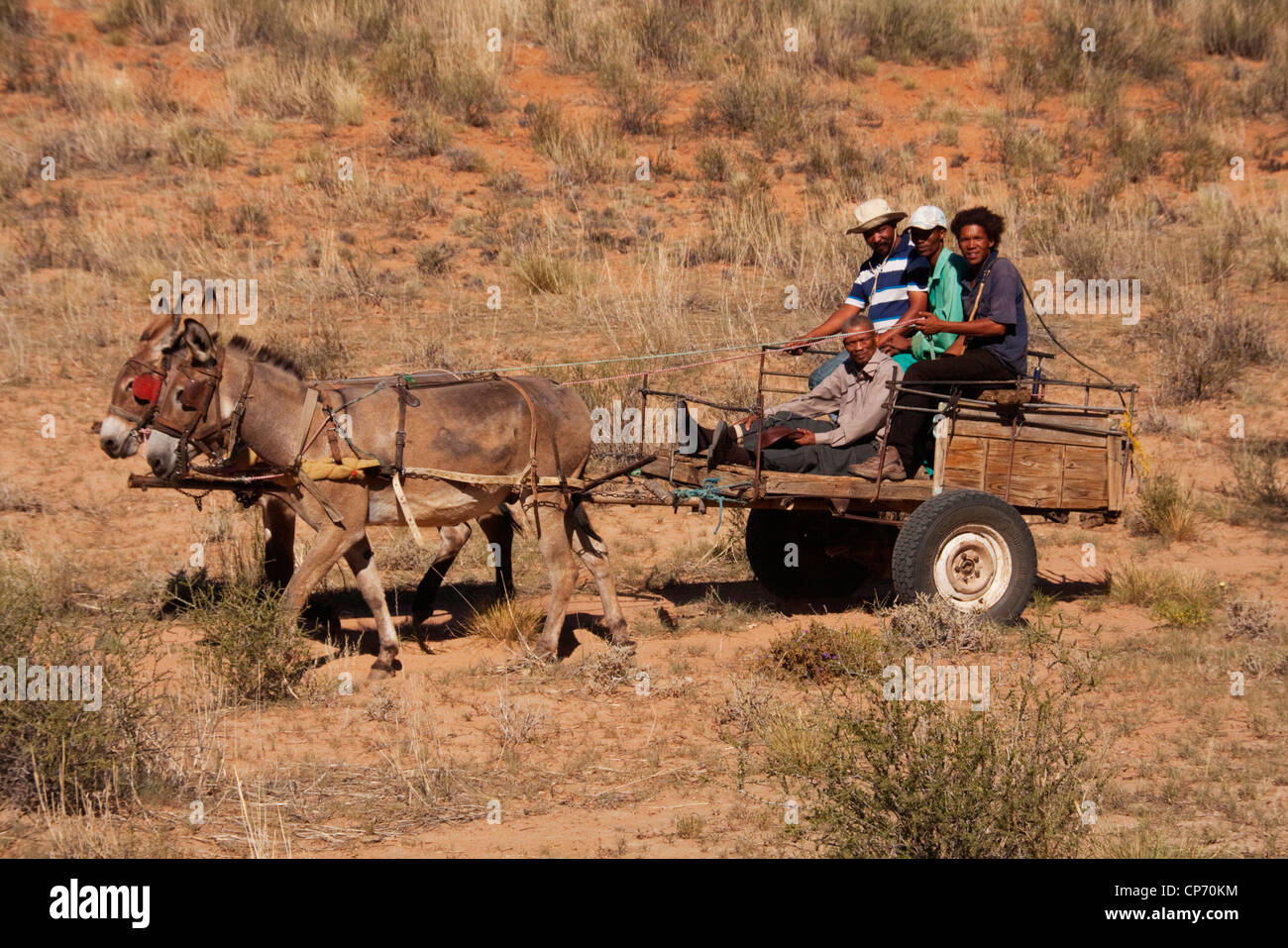 Kalahari locals riding on a donkey cart near Molopo - Stock Image