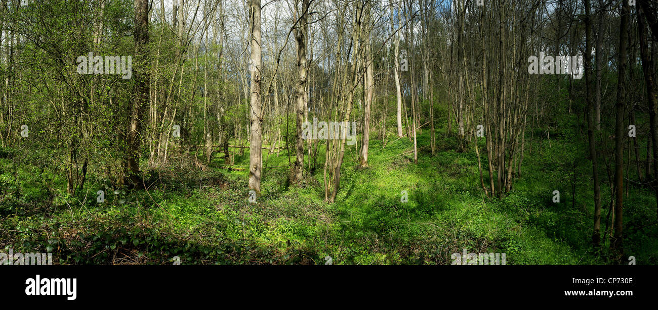 Woodland in Thorndon Park in Essex Stock Photo