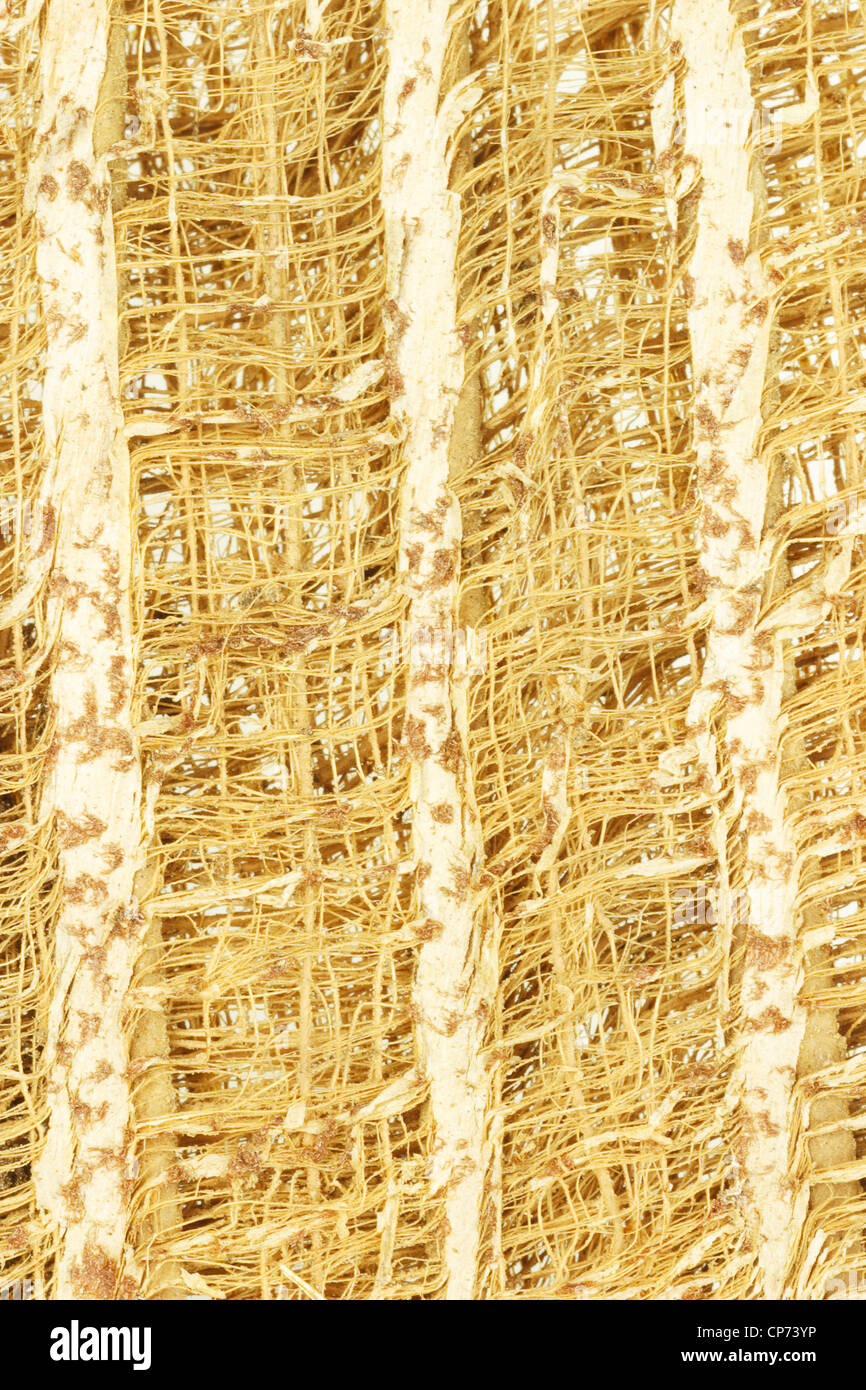 Close Up of Tree Bark Wooden Fibers Background - Stock Image