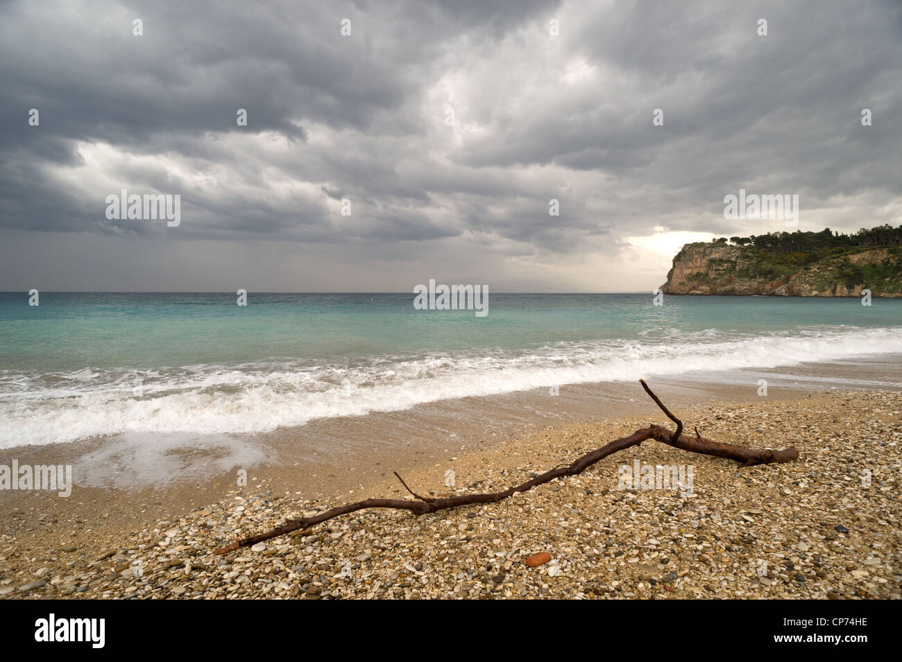 Branch washed up at beach Sicily, Italy - Stock Image