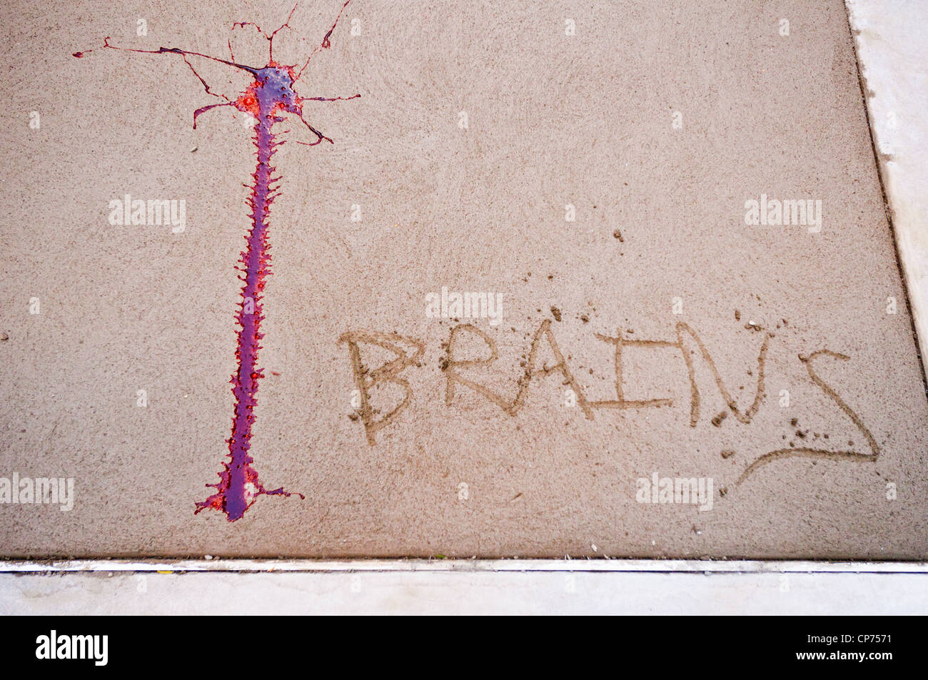 'Brains' and a streak of fake blood appear on wet concrete. Part of a Zombie Crawl in New York City. - Stock Image